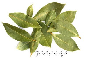Dried Bay Leaves (Laurus nobilis) Photographed by Brian Arthur