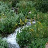 Torrent dans le vallon de Kadzi-Saj. Biotope de Metaporia leucodice (14 juillet 2006). Photo : J. Ouvaroff