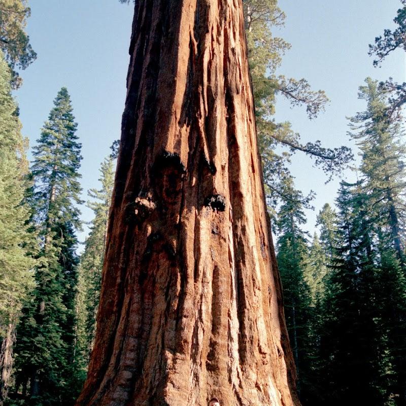 Yosemite_35.jpg