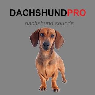 Dachshund Dog Sounds & Barking - náhled