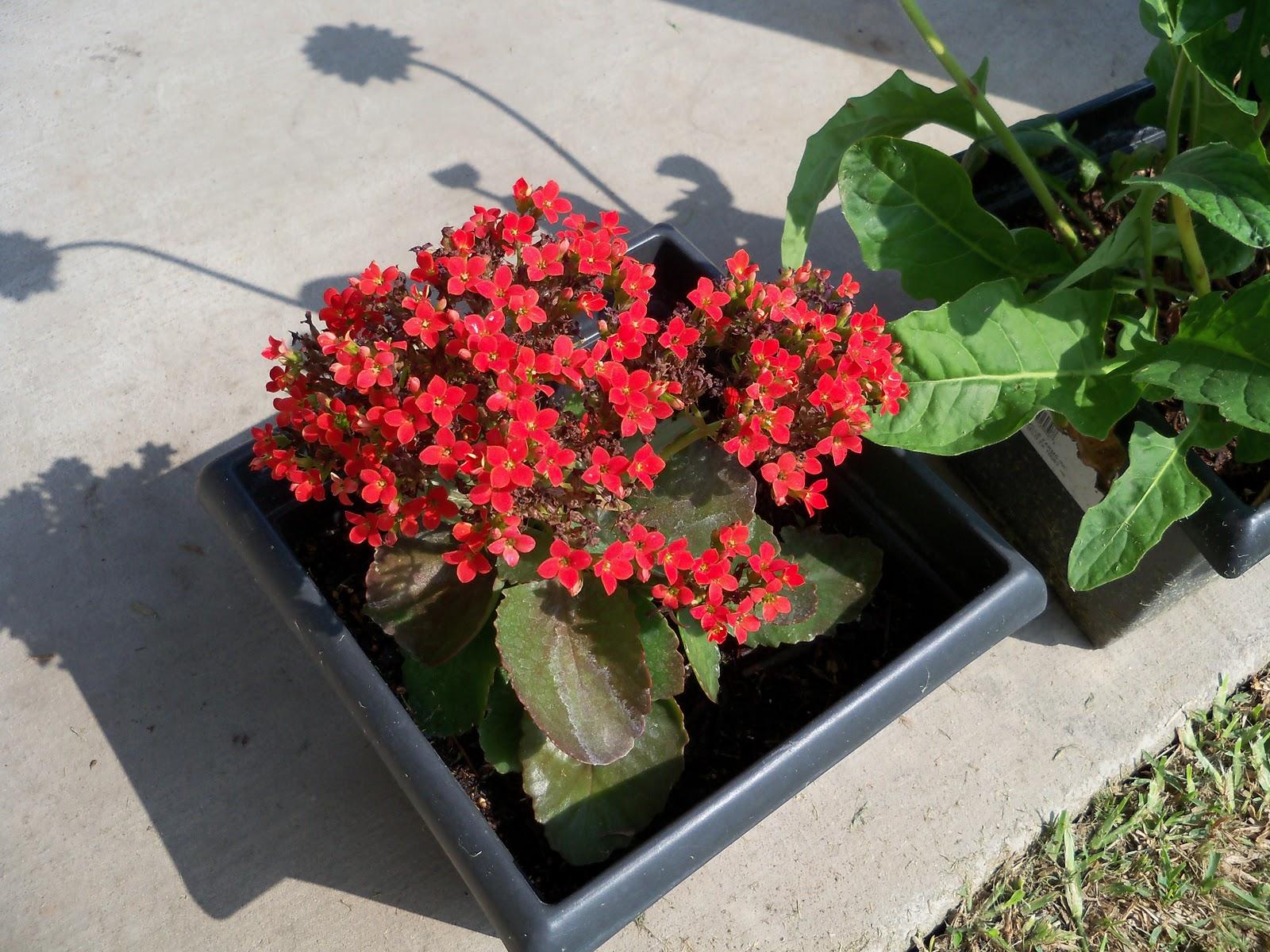 Gardening 2010, Part Two - 101_1933.JPG