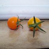 Gardening 2011 - 100_7799.JPG