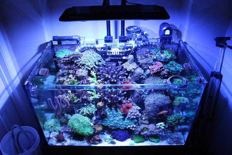 kessil ap 700 owners gather here reef central online community