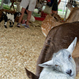 Fort Bend County Fair 2014 - 116_4274.JPG