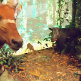 Houston Museum of Natural Science - 116_2778.JPG