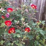Gardening 2014 - 0412190008.jpg