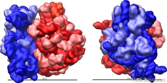 Perbedaan ribosom prokariotik dan eukariotik
