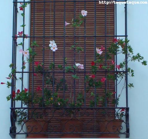 reja típicamente andaluza en Estepona (Málaga)