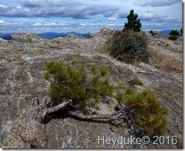 Hidden Lake Trail Glacier NP MT 042