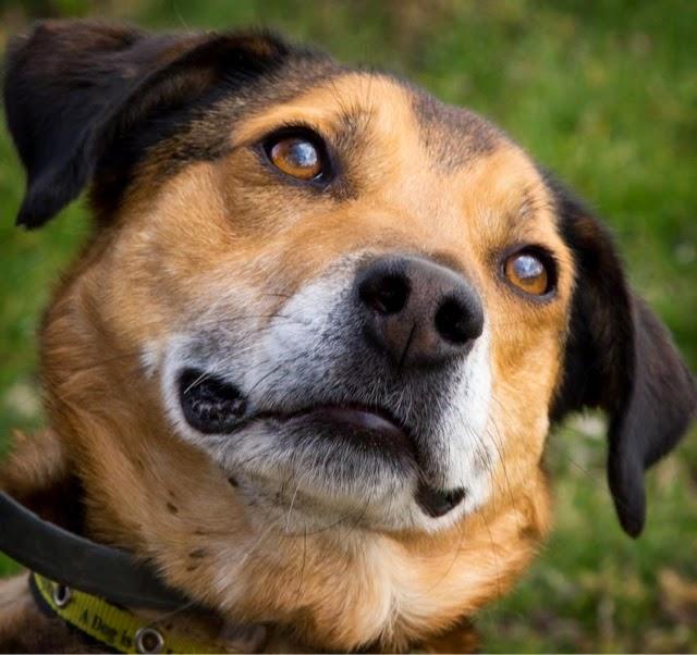 Make A Difference Dog Rescue Mi