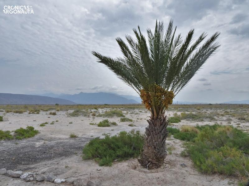 desierto de coahuila