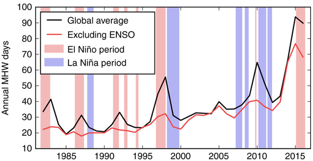 Total number of marine heatwave days globally. Globally averaged time series of total marine heatwave (MHW) days from NOAA OI SST over 1982–2016. The black line shows the globally averaged time series of total MHW days from NOAA OI SST over 1982–2016. The red line shows this metric after removing the signature of ENSO. The light red and blue shading indicate El Niño and La Niña periods, respectively, defined by periods exceeding ±1 s.d. of the MEI index for three consecutive months. Graphic: Oliver, et al., 2018 / Nature Communications