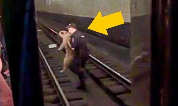 Chuyện ý nghĩa: Cứu chú chó rơi xuống đường ray tàu điện ngầm