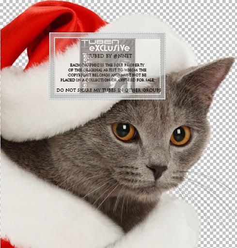 christmas-cat-10122010.jpg