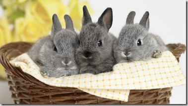 3 gray bunny rabbits in a basket with yellow flower in background on white background.