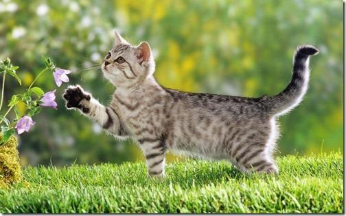 fotos de gatos (4)
