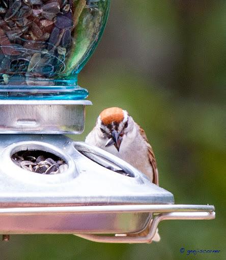 Sparrow_Seed-2014-06-8-21-13.jpg