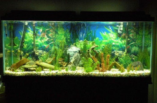 Download diy aquarium design for pc for Aquarium decoration diy