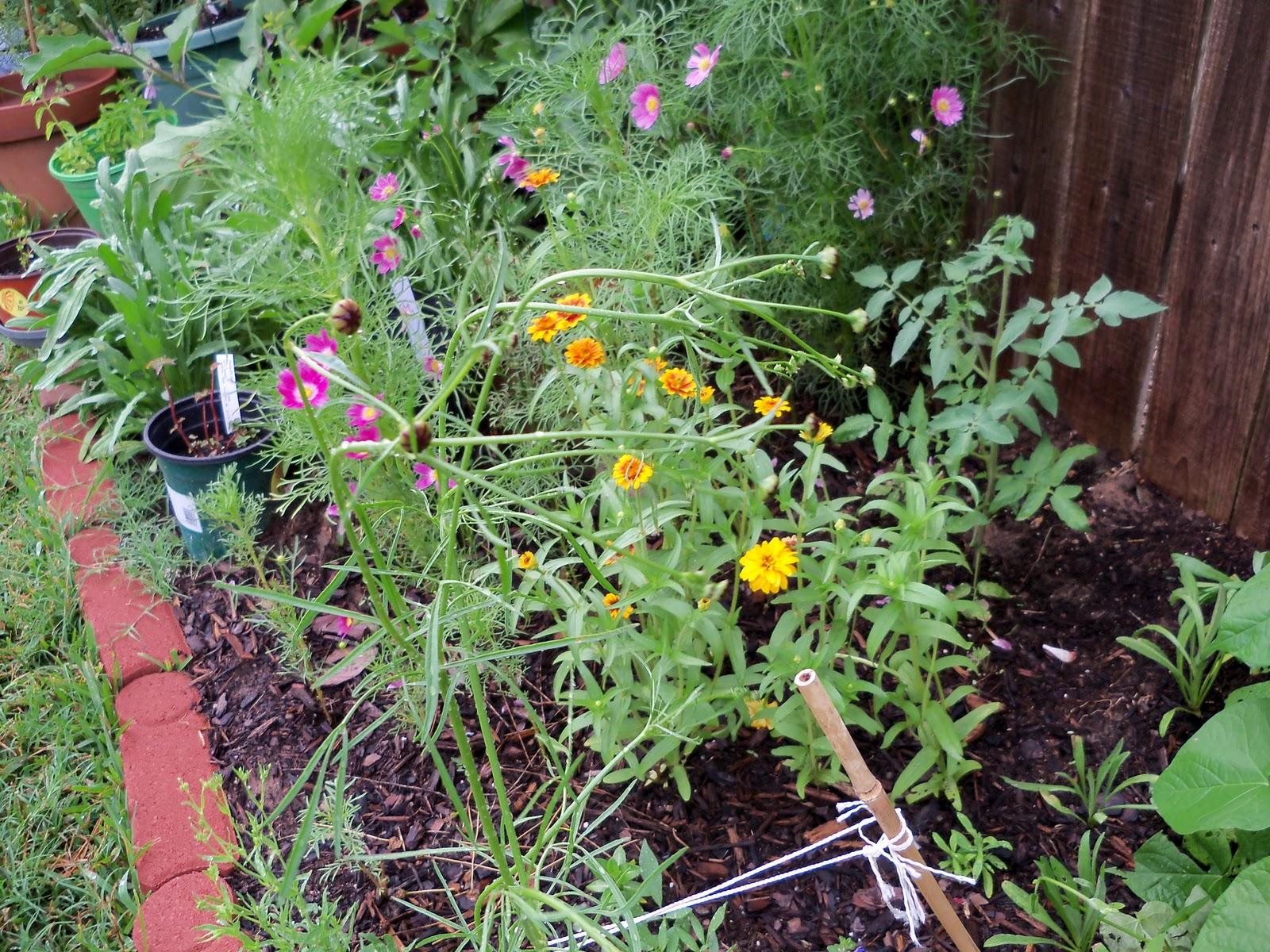 Gardening 2010, Part Two - 101_3206.JPG