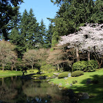 2013_04_01_Cherry_Blossoms_UBC