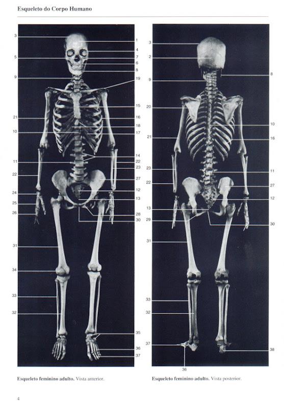 004 Esqueleto do Corpo Humano