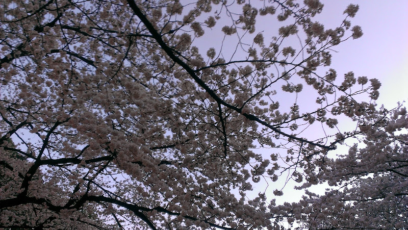2014 Japan - Dag 1 - marjolein-2014-03-30%2B18.05.56-0001.jpg
