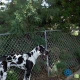 Dynamite Danes Family Album #3 - 2011-06-11_15-38-34_574.jpg