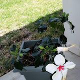 Gardening 2010 - 101_0578.JPG