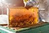 Η «γλυκιά» επιτυχία του 33χρονου μελισσοκόμου στη μελισσοκομία