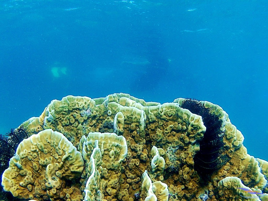 pulau harapan, 16-17 agustus 2015 skc 022
