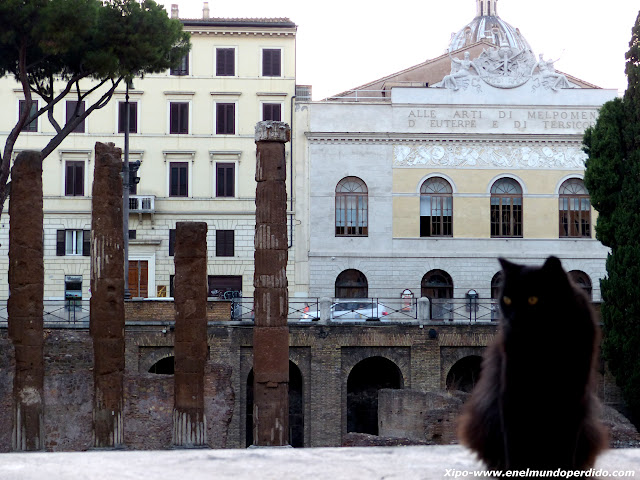 colonia-gatos-roma.JPG
