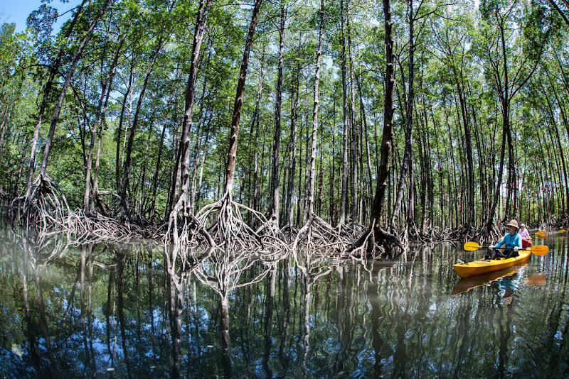 Canoeing in the mangrove fores of Mergui Archipelago, Myanmar
