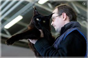 cats-show-25-03-2012-fife-spb-www.coonplanet.ru-028.jpg