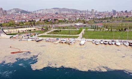Βλεννώδεις ουσίες (γλίχρασμα) πνίγουν τις ακτές της Τουρκίας