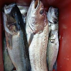 Journée Pêche