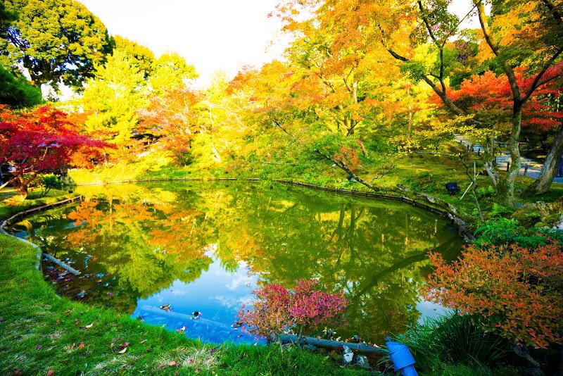 京都 紅葉 高台寺 写真3