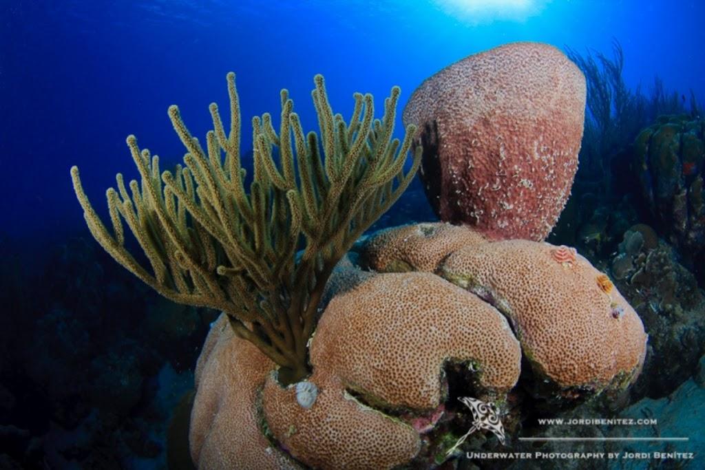 Bonaire: Coral