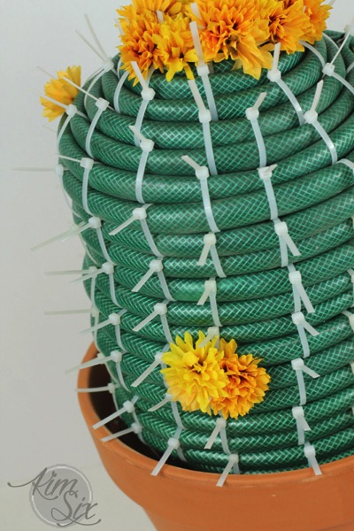 Garden Hose Barrel Cactus