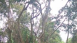 Geger, Warga Pulau Raman Temukan Mayat Tergantung di Pohon Gunakan Tali Sepatu