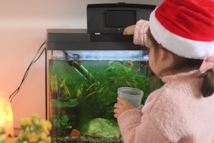 Fish pet children Montessori