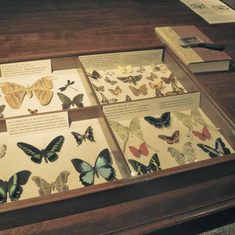 Fotos de Walters Art Museum - Baltimore. Foto numero 12902044242754132794.