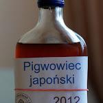 Antybrowar Pigwowiec Japonski 2012.jpg