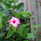 Gardening 2012 - 115_1659.JPG