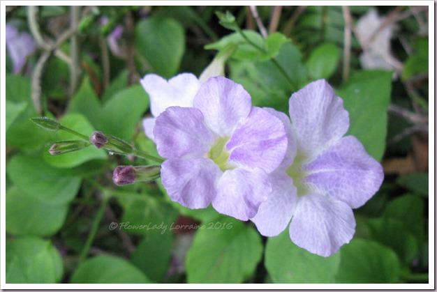 12-09-violet