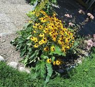 Echinacea gelbe schrägIMG_0673.JPG