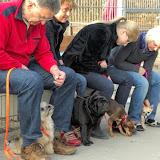 Kleinhundegruppe Mittwoch 17.30 Uhr - DSC_0042.JPG