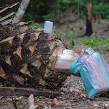 Récolte du vin de palmes. Ebogo (Cameroun). 9 avril 2012. Photo : J.-M. Gayman