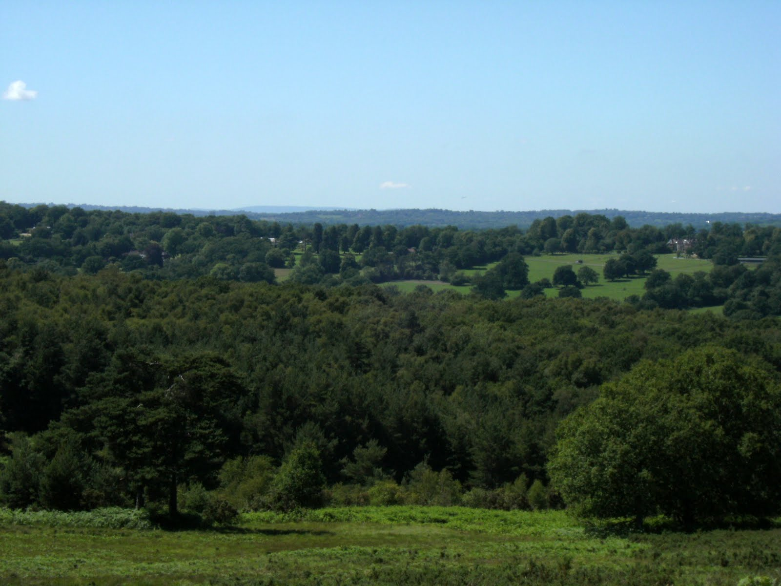 DSCF8738 Summer view from Ashdown Forest