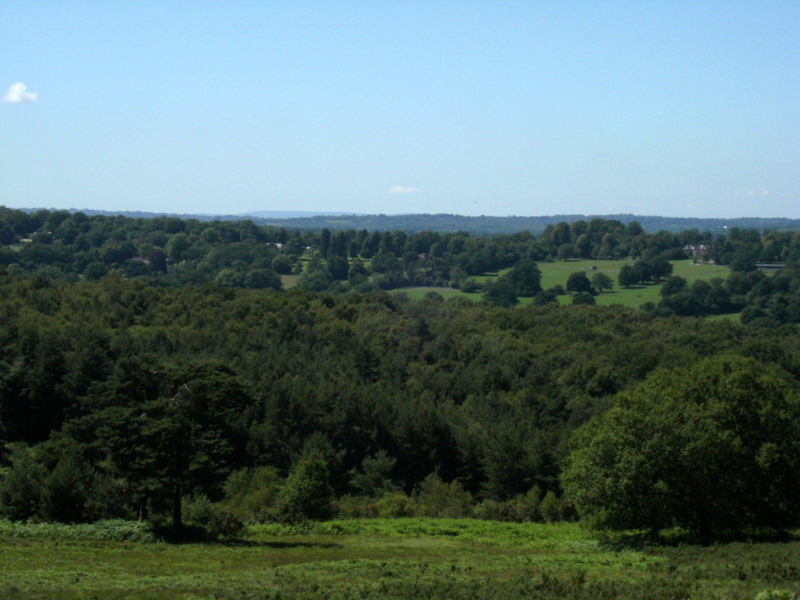 DSCF8738 Summer view from Ashdown Forest