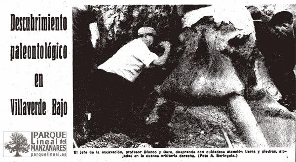 Tras verificar que el hallazgo es muy relevante, comienzan las excavaciones bajo la dirección de Rafael Blanco. Participan miembros del Museo de Ciencias Naturales y los propios operarios de Transfesa.